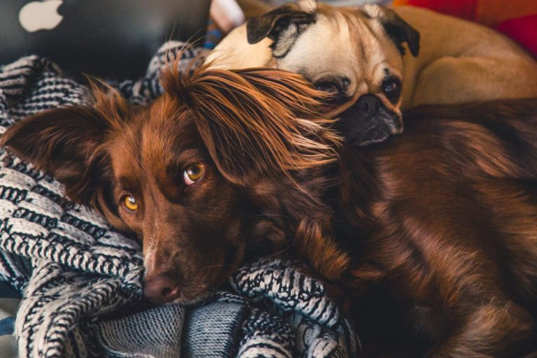 Grooming & spa pre psov Dog Culture